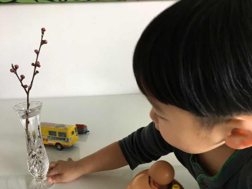 今日の親子☆,桃の花,こんにちは,魔法の言葉